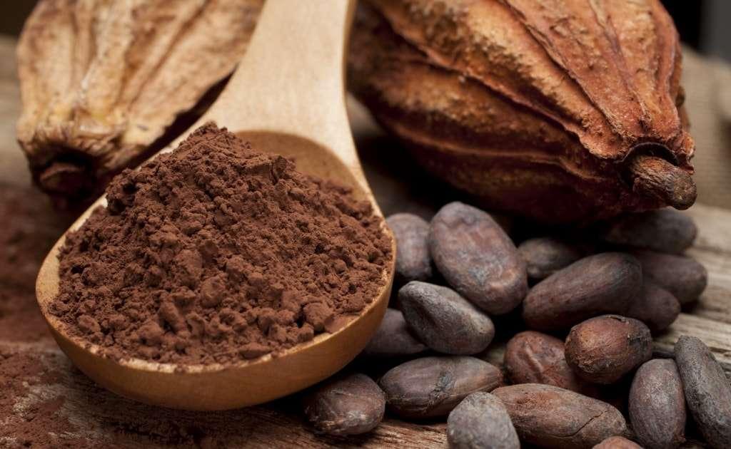 Colher com chocolate puro em pó, cacau em sua forma natural e em semetes tostadas pré preparação do produto final